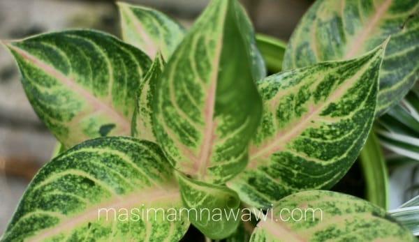 hati yang baik seperti daun tanaman yang segar dan indah